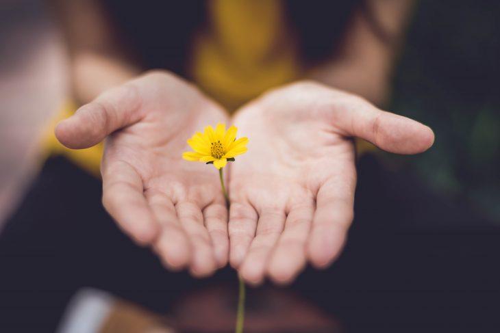 Pientä keltaista kukkaa tarjoavat kädet