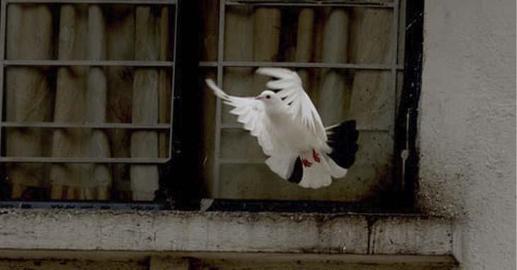 Pyhän hengen symboli, kyyhkynen