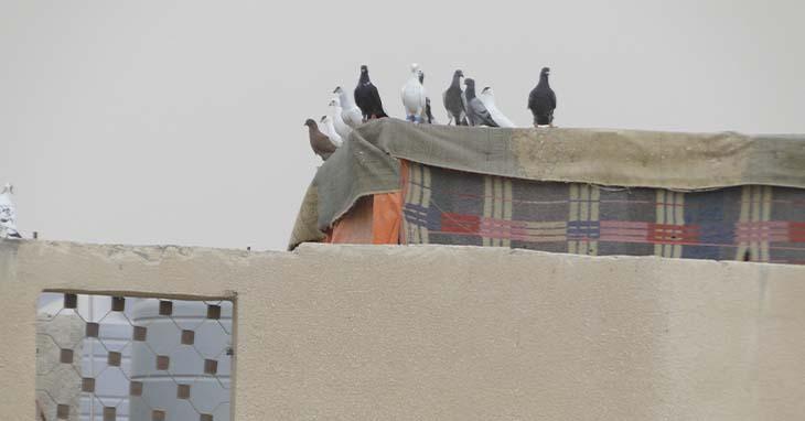 Kyyhkysiä pakolaisleirin rakennuksen katolla